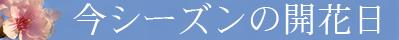 sakura_konseason